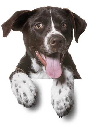 Smiling dog in footer