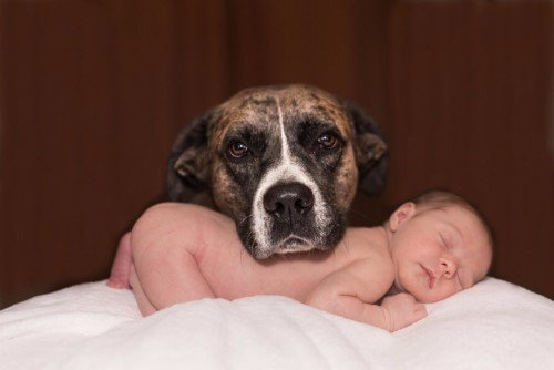 Dog protecting baby sleeping