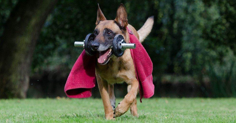 Dog workout
