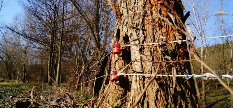 Electric fence in the woods