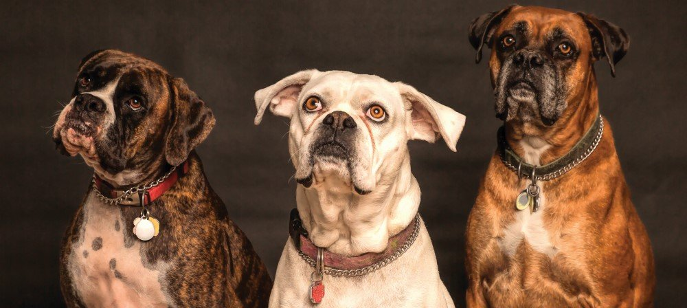 How does flea collar work for dogs