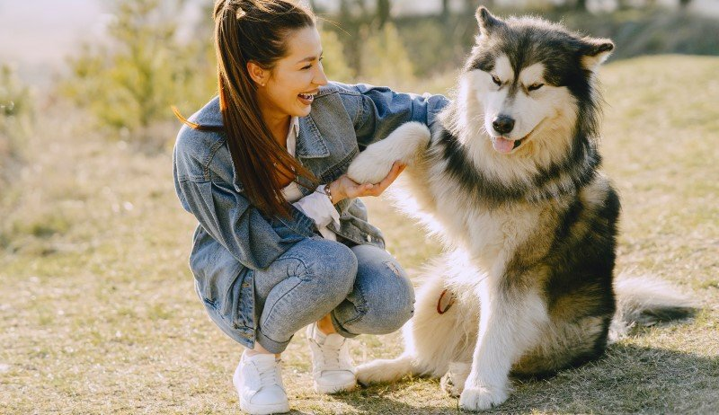 Husky in a park