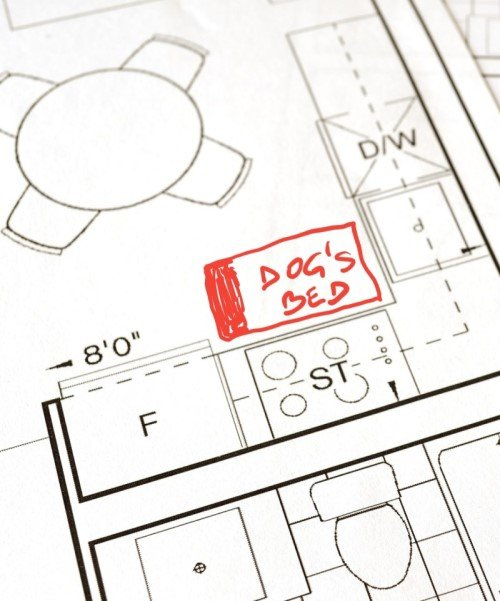 Plan to place a dog bed