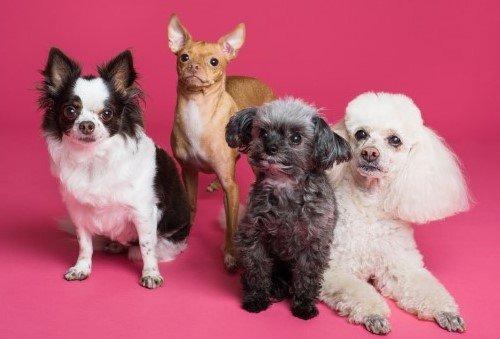 Puppies, mixed breeds