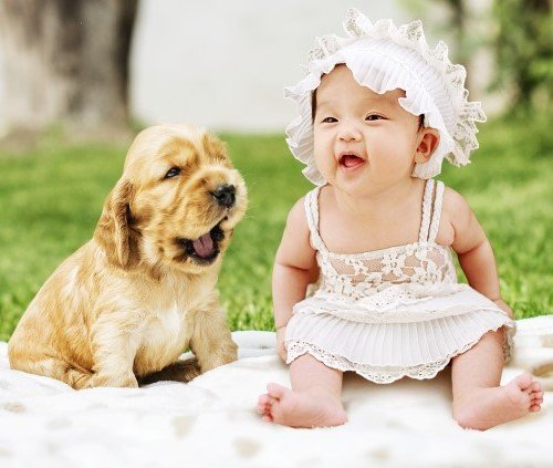 Puppy with baby girl
