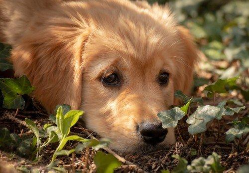 Sad dog left alone
