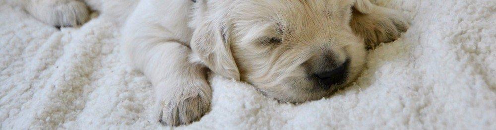 Should you wake a sleeping dog