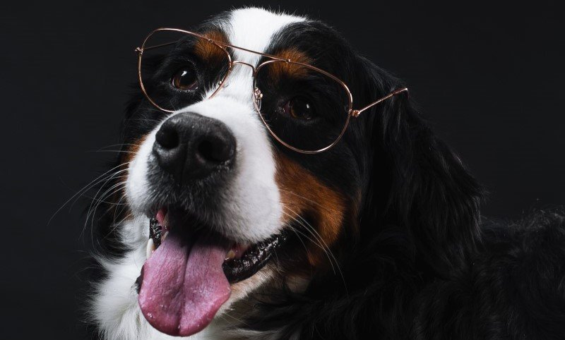Activities for intelligent dogs