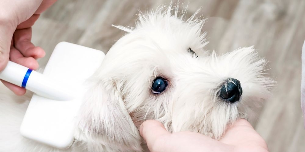 Dog grooming item