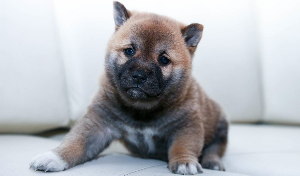 A new puppy
