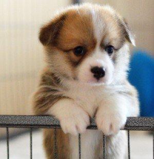 Puppy waiting