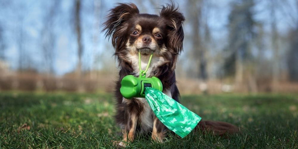 What are the best dog poop bags