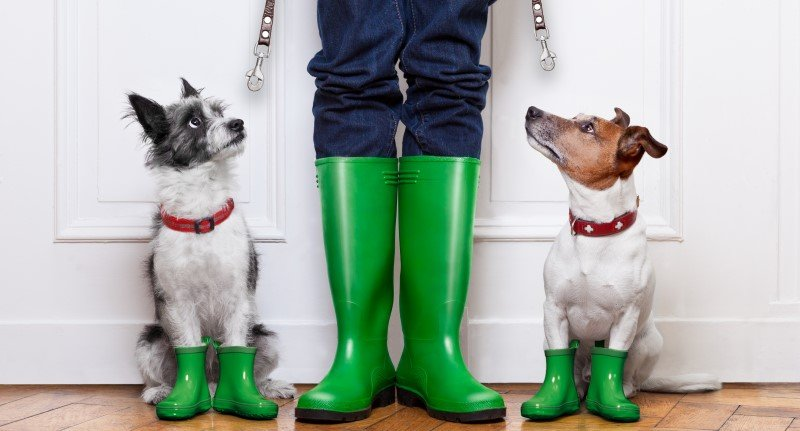 Dog shoes - green boots