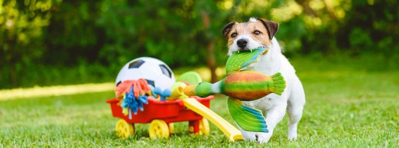Dogs adore playing