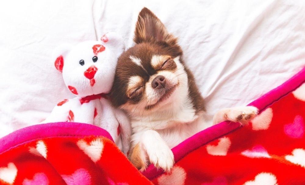 Where should my dog sleep at night time