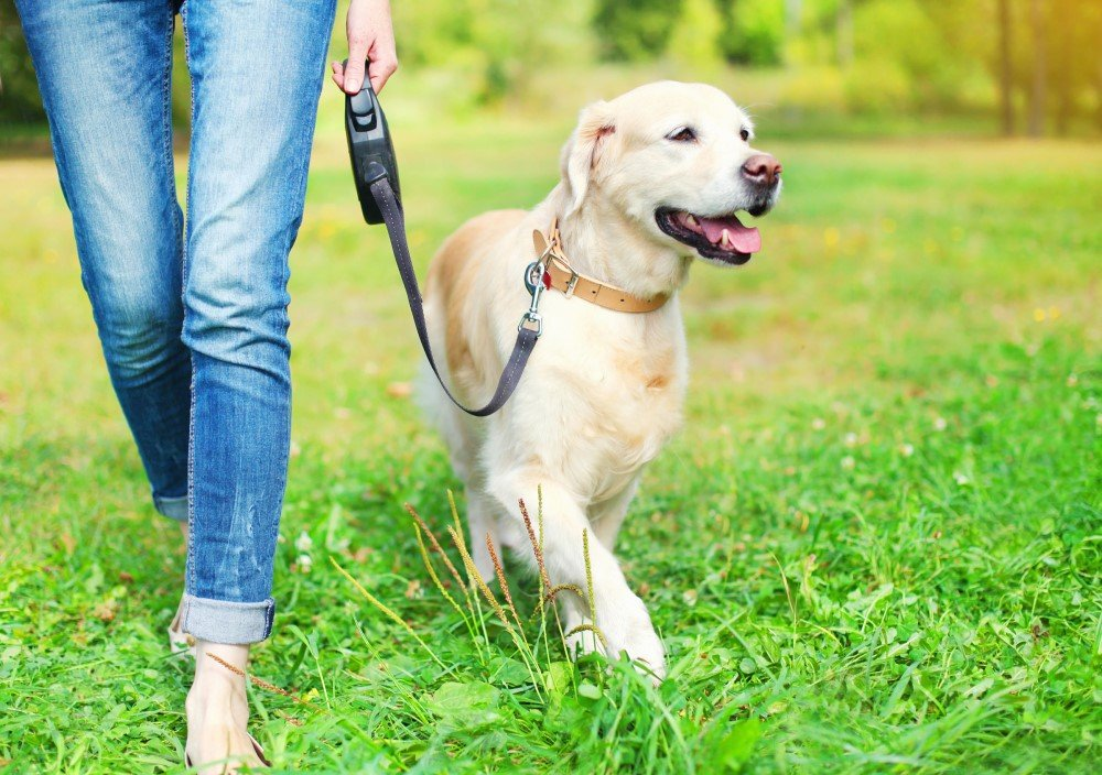 Are You Ready to Adopt a Dog - Crucial Questions to Ask