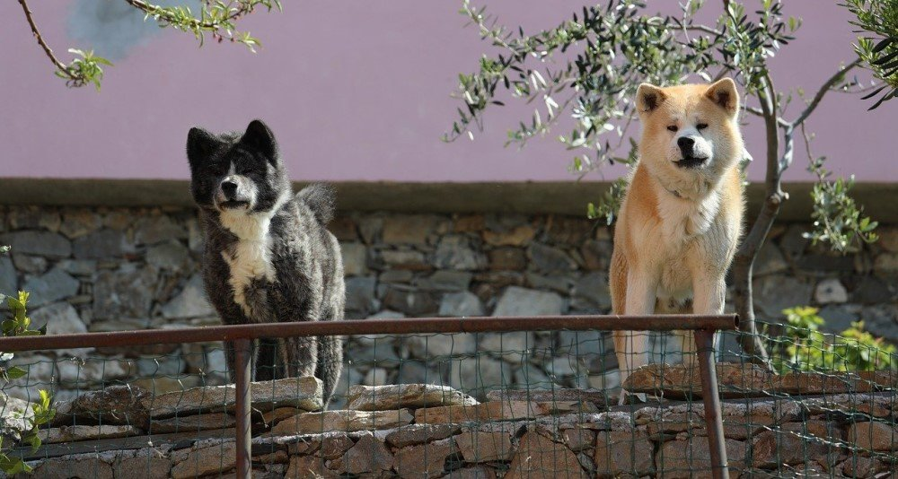 Dogs guarding