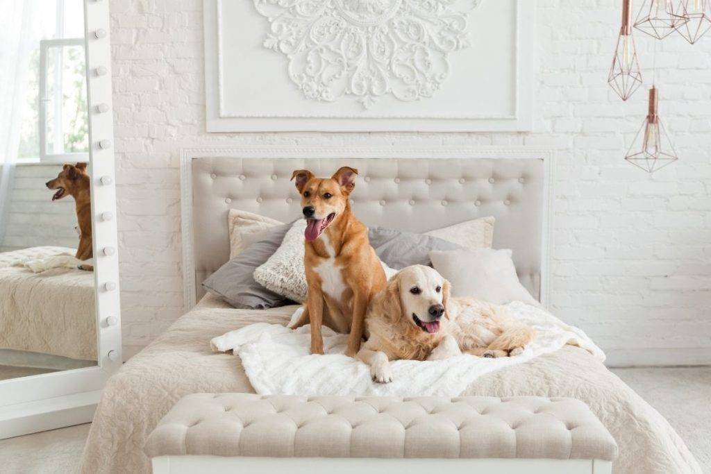 Are dog hotels any good