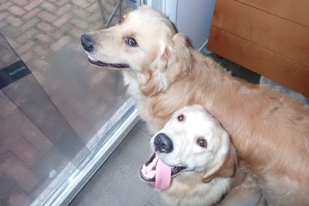 Dogs wanting to get outside