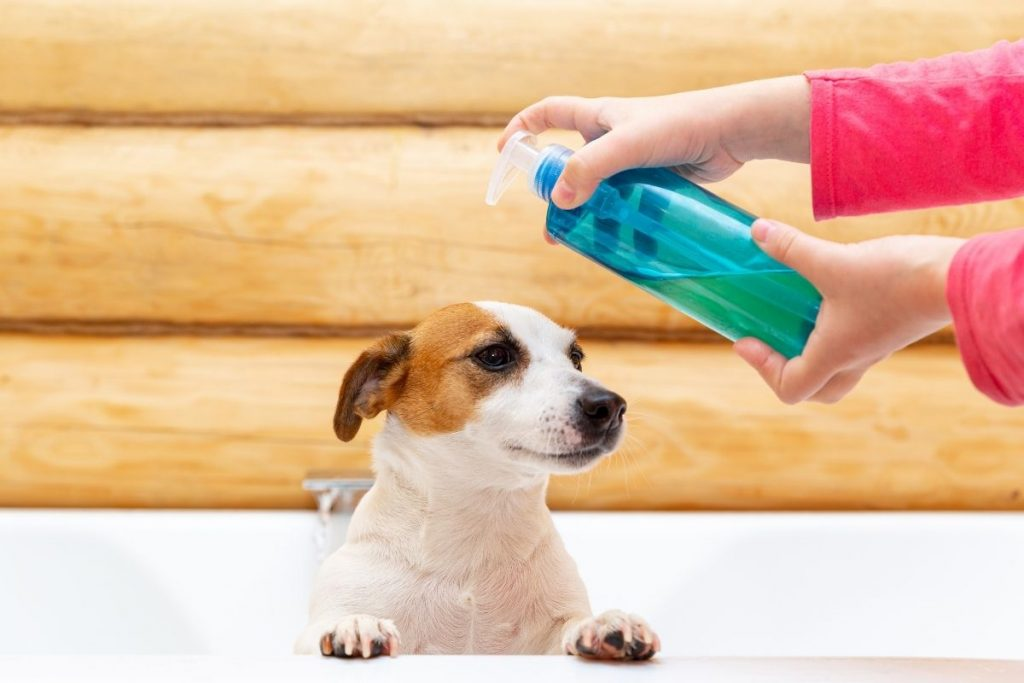 Protect your dog from flea and ticks