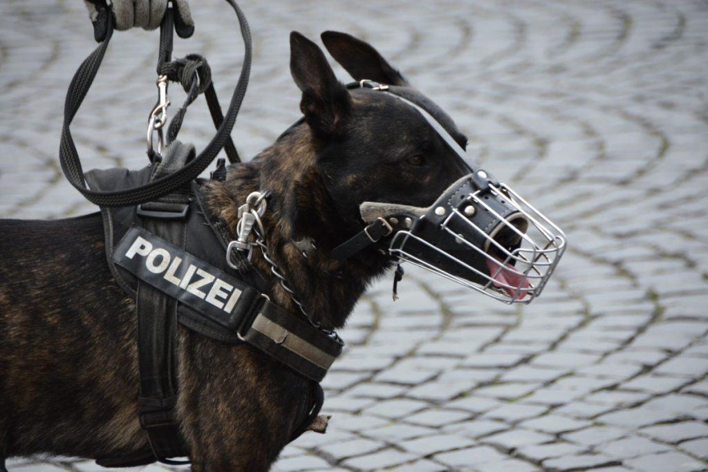 K9 Police security dog