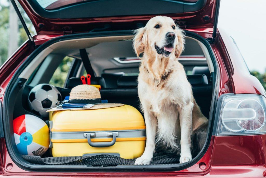 Find pet friendly hotels